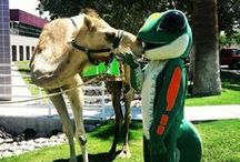 Hump Day Humor / Uh-oh! Guess what day it is! (TM) / by GEICO Careers