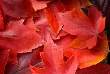Herfst / Kleurrijke herfstplaatjes om vrolijk van te worden!