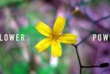 Flower Power / Photos de fleurs sauvages. Florilège de toutes sortes et bouquets garnis. France, Seychelles, Martinique, Madagascar.