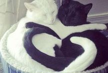 Cats/kitty / filine Cats is beautiful and elegand animal. She's create your live full happy and hope!