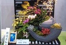 FlowerWaveNiigata2013