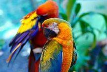 Aves: Deixe-as livres! / A felicidade estava ali, dentro de mim. A encontrei enquanto ouvia o canto dos pássaros. (Kléber Novartes)
