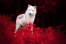 WOLF / farkasokról