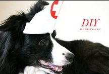 Emergency & First Aid for Humans/Pets / What to do in an emergency & human/animal first aid kit.