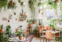 Houseplants & Garden / Inspiration for my indoor and outdoor garden, my vegetable patch & decorating with plants.