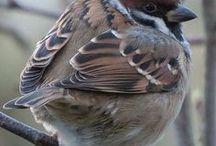 Birds - clever sparrow
