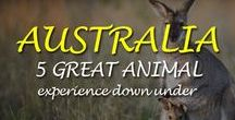 5 Great Animal Experiences down under / 5 Great Animal Experiences down under - Here's a list of some great places where you can get up close & personal to 5 great animals in Australia
