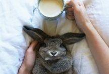 Bunnies ❤
