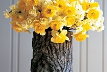 """""""Que vejo flores em você..."""" / """"Nessa vida passageira  Eu sou eu, você é você  Isso é o que mais me agrada  Isso é o que me faz dizer..."""""""