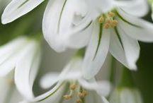 Garden.Ideas.&.Flowerpics.