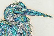 Doodle: Birds
