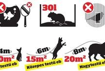 állatos jogok, szabályok