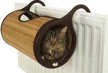 macska lakás