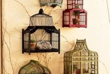 birdcages nests eggs and feathers