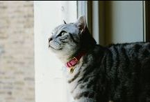 Luxury Cat Products / Cheshire & Wain cat products