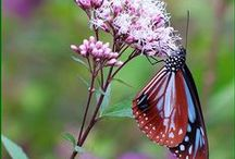 beautiful butterfly...... / by stella christ siem
