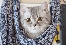 Cats / by Donna Estridge