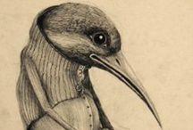 .birds.
