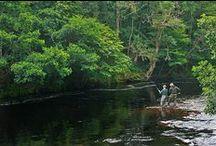 River Alness - Novar Beat 5 / Pools and salmon anglers fishing on Beat 5 of the Novar Fishings, River Alness, Scotland.