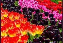 Arte con flores / by Lucero F. De Hdez.