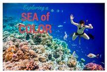 [Color Inspiration] / Colors I Love