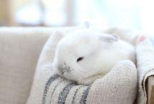 ⭐️ CUTE ANIMALS ⭐️ / Soooo cute!