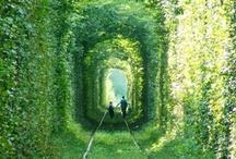 Wanderlust / by Melinda Marshall