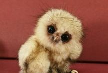 Cute! / by Melinda Marshall