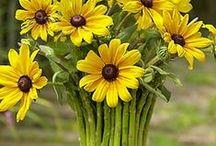 flores para pintar / todas aquellas flores posibles de pintar... / by marianela patricia aguero alvarez