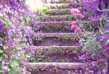 Gardening Inspiration  / Plants and flowers