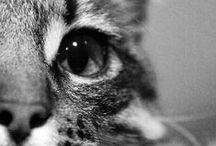 Animals *.*