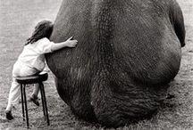 ANIMAL LOVE / Priceless.