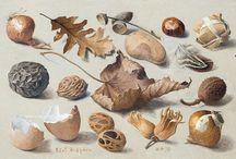 Botanicals - Planches botaniques