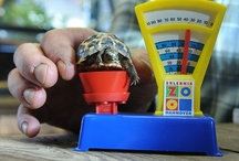 Terrapins, Turtles, and Tortoises / I like turtles way more than that zombie kid does. / by Mindy M.