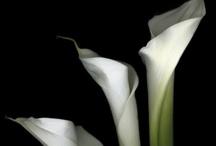 Flowers / by Anna Pereira