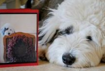 Prudence and Puppies / Inspiration for our favorite Old English Sheepdog and for other Puppy Love