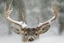 WINTER / Fire place, snow, cozyness...