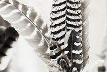 FEATHERS / Soft, colourful and decorative.