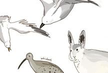 My Illustration Work