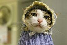 crochet pets / by Lea Anne Meade