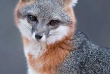 FOXES / The cutest.