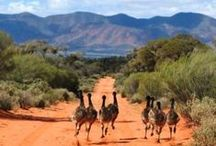 AUSTRALIA / From the Outback to Melbourne, the best of Australian nature and cities.