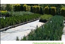 Ogłoszenia Ogrodnicze / Najnosze ogłoszenia z serwisu ogloszeniaogrodnicze.pl Zapraszamy do odwiedzania naszej strony internetowej. Newest ads from polish gardening classifieds service. Join us today and promote Your products in Agricultural category.