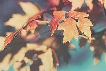 Enjoy the Fall!