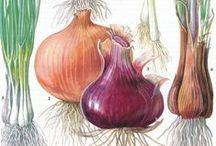 .: B O T A N I C A L /Biological illustration :. / Vintage Floral Illustrations