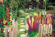 Dreaming of a perfect garden / by Aijan Unelmia <3