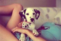 Pongo puppy