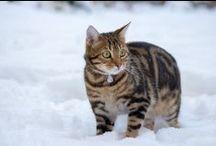 Katzen / Alle Arten von Katzen