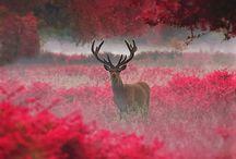 Beauty on earth