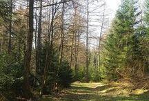 Dobel / Alles über Dobel, den schönen Ort im Schwarzwald für Touristen und Einheimische  Ich bin Daniela Walch und blogge auf http://buchvogel.blogspot.com Buch-Rezensionen